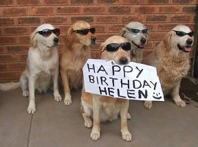 40-Zimmy-happy-birthday-helen-dog-bark-training-collar