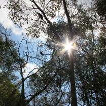 Underwood Park, Brisbane. Morning sun